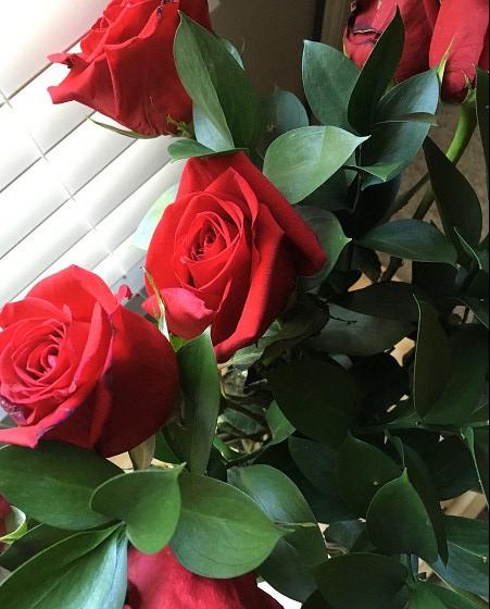 Roses 02_2018